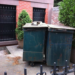 Will I take her back, or throw the baggage out? (drumthwacket) Tags: sleeping brooklyn trash cat garbage snooze skip frontyard unionstreet