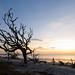 Driftwood Beach 9