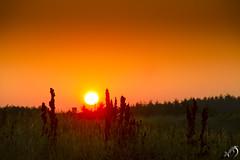 Sunrise Løkken (Appaz Photography☯) Tags: denmark jylland solopgang sun sunrise løkken vesterhavet thedanishwestcoast water ocean sea beach waves dunes sand appazphotography
