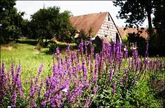 Dorfidylle ...countryside (Steffi-Helene) Tags: germany bayern blumen franconia mittelfranken ruhe friede steinbeinrnberg