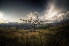 Blackett's Ridge (dennyforreal) Tags: arizona tucson sabinocanyon blackettsridge