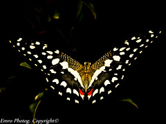 Fly Fly Butterfly! (Emro Masoumi) Tags: me2youphotographylevel1