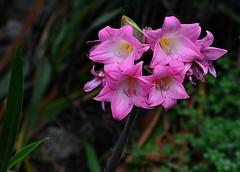 Eden 2012_D5-9135 (Ennor) Tags: uk flower flora cornwall unitedkingdom edenproject august eden 2012 kernow weeklyfreeflight mediterraneanbiome