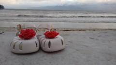 Mini melissa + o pequeno Prncipe III (Sr Estefnia) Tags: minimelissa melissa caraguatatuba martindes praia mar flor litoral sp brasil