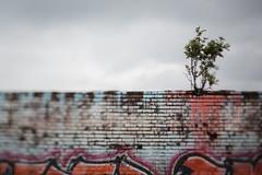 Tree (hansekiki ) Tags: rgen prora ostsee balticsea squeezerlens canon 5dmarkiii