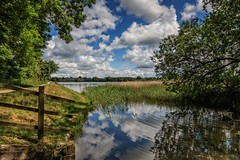 In the corner of the lake (Anthony Plancherel) Tags: buckinghamshire category england landscape marsworthreservoir places travel marsworthlake lake water ripples reflections reflection mirror reeds trees shadow shade fence woodland bank canon1585mm canon70d canon clouds cloudy bluesky wow