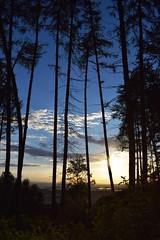 Vom Wald in die Ferne 2 (Timo Jng) Tags: nikon d3300 1855 18mm sun sunny sunlight sky blue himmel blau sonnig frhabend evening sunset landscape landschaft ferne beautiful view aussicht lol unbearbeitet natur nature natrlich
