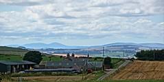 Pastoral scene. (artanglerPD) Tags: pastoral scene fields fences farms trees cattle hills blue sky clouds stubble machinery