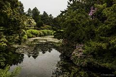 Garden view 2 (cstevens2) Tags: kent lamberhurst scotneycastle unitedkingdom garden tuin verenigd koninkrijk grootbritanni