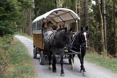 Von Willingen nach Usseln (dieter.steffmann) Tags: rothaargebirge hochsauerland uplandsteig aufmknoll aufdemknoll titmaringhausen medebach pferdekutsche upland