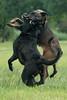 Bitchfight (Wicked posse) Tags: onbekend kamiel