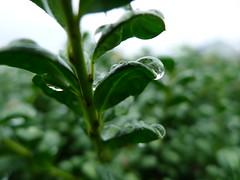 Drop (Junko S. Photography) Tags: lumix panasonic lx5