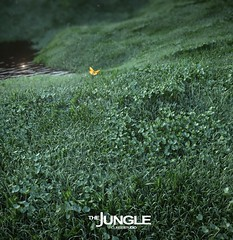 The World S Best Photos Of Grass And Vray Flickr Hive Mind