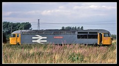 A Grid in the Grass (SydPix) Tags: plant grass grid diesel trains richard works locomotive railways fireweed doncaster trevithick brel railfreight class56 56037 sydyoung