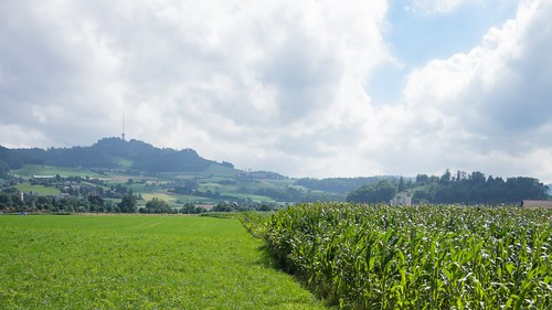 Corn and Bantiger, Alternate Crop