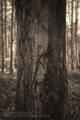 Kenaz  (Myrkwood666) Tags: wood tree forest symbol boom bos wald baum pagan rune futhark kenaz cen asatru kaun kaunan seelenwinter mrkskygge myrkwood666