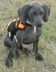 """12 weeks Gus vest 141 • <a style=""""font-size:0.8em;"""" href=""""http://www.flickr.com/photos/66999112@N00/7672714454/"""" target=""""_blank"""">View on Flickr</a>"""