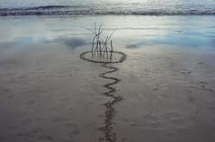 catch the drift (wild goose chase) Tags: sea sand northumberland driftwood bamburgh landart