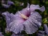 Nach dem Regen 28.07.2012