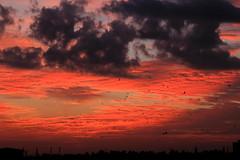 Twilight Sky (subhashish.paul) Tags: light sunset cloud india kite bird nature canon landscape evening twilight bangalore top20sunsetsofourhearts canon550d mygearandme me2youphotographylevel2 me2youphotographylevel3 me2youphotographylevel1 me2youphotographylevel4