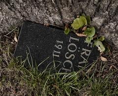 Zentralfriedhof (hedbavny) Tags: vienna wien friedhof tree cemetery graveyard ego austria sterreich wiese wiener gras ani ich baum rinde zentralfriedhof 1911 fragment simmering camposanto zentralfriedhofwien bruchstck grabinschrift