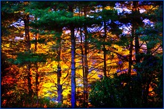 *The*Enchanted*Forest* (DonnazMagicalPix) Tags: rockpaper rockpaperexcellence