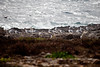 Friends (Emanuele Spano') Tags: summer mediterraneo mare blu seagull sicily azzurro gabbiani sicilia trapani favignana egadiislands