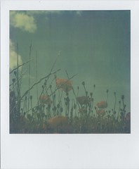 Poppies (Lizzie Staley) Tags: blue red summer sky orange cloud france green film polaroid sx70 poppy poppies instant ildere artistictimezero