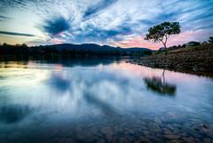 Sea Eagle Lagoon - Tree (dazza17 - DJ) Tags: landscape australia hdr susnet goldcoastgoldcoast seaeaglelagoon daryljamesscapeslandscapes