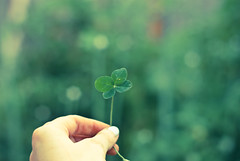 I am so lucky (lydiafairy) Tags: life green love me happy hand symbol bokeh gardening luck lucky fourleafclover luckyme hbw itfeelsgoodtobeawholeperson istillcollectthemandpresstheminadictionarythatisover100yearsold