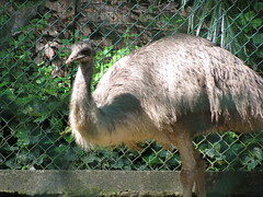 malaysia emu kualalumpur australianbirds klbirdpark kualalumpurbirdpark flightlessbirds walkinaviary tamanburung kllakegardens worldslargestcoveredaviary