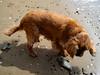 Bella (russelljsmith) Tags: winter newzealand dog sun beach sunshine coast sand bella sundaydrive firthofthames 77285mm waitibay