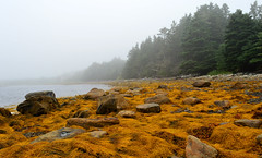Creeping Fog On The Shoreline (TheNovaScotian1991) Tags: mist canada seaweed water fog rocks novascotia shoreline kitlens eerie easternshore 1855mm geology nikond3200 foggyshore