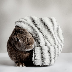 Rabbit with hat (Jeric Santiago) Tags: animal bunny conejo hase hat kaninchen lapin pet rabbit winterrabbit