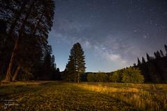 The Milky Way from Yosemite National Park (josefrancisco.salgado) Tags: california usa tree night forest stars woods flora nikon unitedstatesofamerica bosque astrophotography rbol astronomy yosemitenationalpark nikkor d5 themilkyway lavalctea 1424mmf28g astrofotografa astronoma