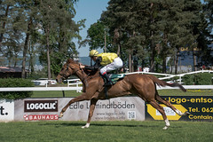 Galopper (Nihil Baxter007) Tags: horse animal race bet pferd rennen turnier tier gallop horserace pferderennen wette seckenheim galopper mnnheim