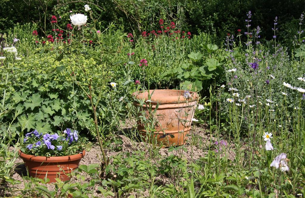 Ckuchem 2924 (christine_kuchem) Tags: Blumen Garten Bunt Frauenmantel  Katzenminze Töpfe Sommerblumen Sommergarten