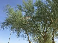IMG_0511 (Mesa Arizona Basin 115/116) Tags: basin 115 116 basin115 basin116 mesa az arizona rc plane model flying fly guys flyguys