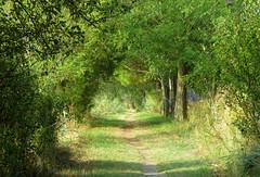 IMG_0054x (gzammarchi) Tags: italia paesaggio natura ferrara lidodispina parcodeltadelpo oasi vallesina strada sentiero monocrome