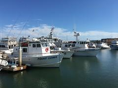 Sun Harbor Marina (Anna Sunny Day) Tags: sunharbormarina pointloma boats sandiego