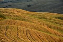 Summer waves [EXPLORE] (Antonio Cinotti ) Tags: explore landscape paesaggio toscana tuscany italy italia siena hills colline campagnatoscana cretesenesi asciano nikond7100 nikon d7100 rollinghills nikon1685 sunset tramonto