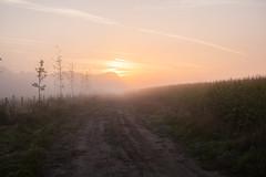 (Vermeero) Tags: road dawn corn canoneos5d ef50mmf25macro