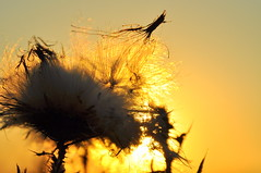 Weerfoto maandag 12 september (Omroep Brabant) Tags: weer weerfotos lente zomer herfst brabant omroepbrabant