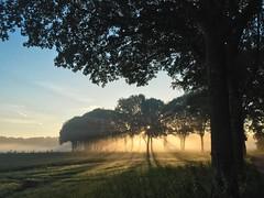 Nevelige ochtend (Jan R.Ubels) Tags: fog sunrise tree morning iphone boom zonsopkomst drenthe vries ochtend nevel mist