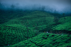 DSC01582 (Sujith Ninan) Tags: travel photography sony sonya6000 35mm 16mm kerala india munnar landscapes monsoon vsco asia friends digital flower sky tree green mountians portrait family roadtrip road car bw new me