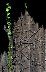 nature pas tout  fait morte ... (jean-marc losey) Tags: france gers lectoure naturemorte porte d700