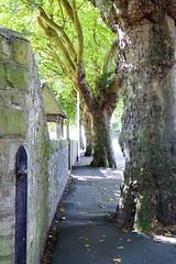 Waterloo Road (garethedwards36) Tags: waterloo road wall trees path footpath cardiff wales uk lumix