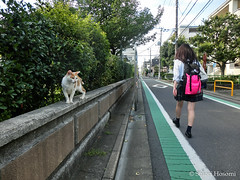 (Shiori Hosomi) Tags: 2016 september japan tokyo 23  cats mammalia       carnivora felidae   felis