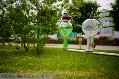 PLW_5548 (Laszlo Perger) Tags: wien vienna sterreich austria blumengarten hirschstetten flowergarden