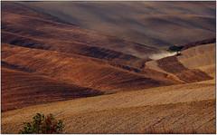 Val d'Orcia. (rogilde - roberto la forgia) Tags: colline chianti toscana golden fields campi dorcia elitegalleryaoi bestcapturesaoi